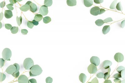 Carta da parati frame of green branches, eucalyptus leaves on a white background. flat layout, top view