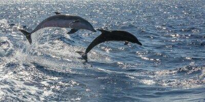 Carta da parati frei schwimmende Delfine vor Teneriffa