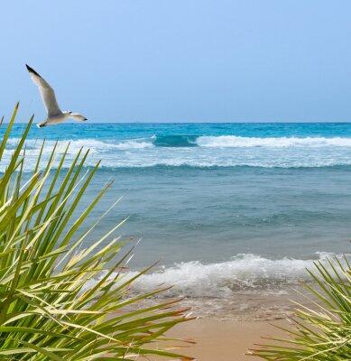 Carta da parati Gabbiano sulla spiaggia solitaria