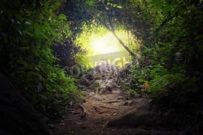 Carta Da Parati Foresta Tropicale : Galleria naturale nella giungla foresta modo percorso strada carta