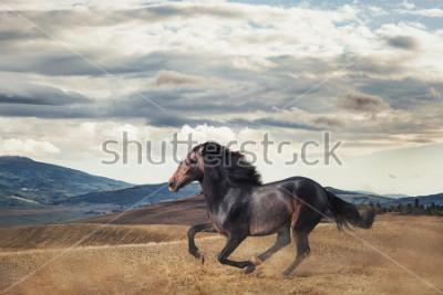 Carta da parati Galloping horse