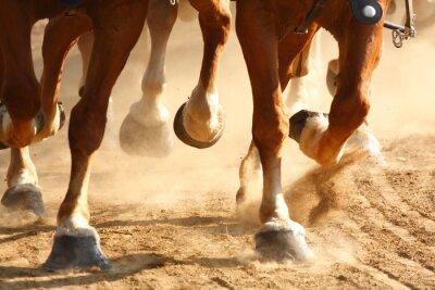 Carta da parati Galloping Horse Zoccoli
