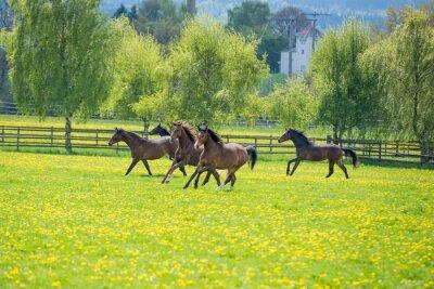 Carta da parati galopoierende giovani cavalli sul pascolo