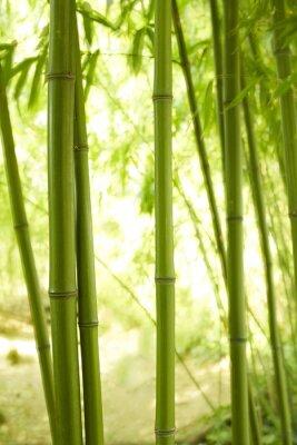 Carta da parati Gambi di bambù 2