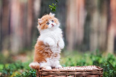 Carta da parati gattino birichino giocoso nella foresta