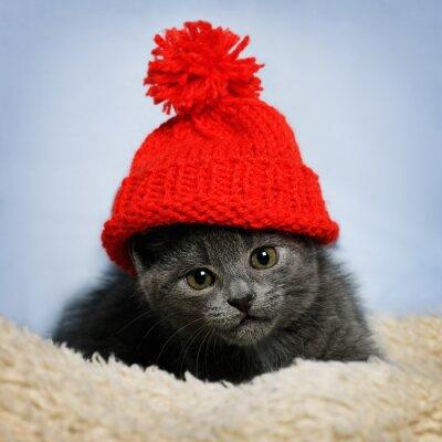 Carta da parati gattino in un cappello rosso