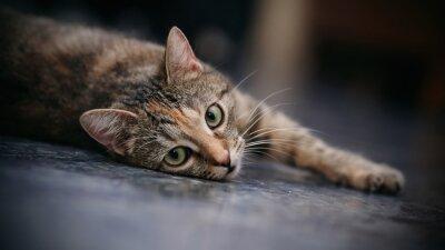Carta da parati gatto a strisce triste con i baffi bianchi