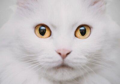 Carta da parati gatto bianco