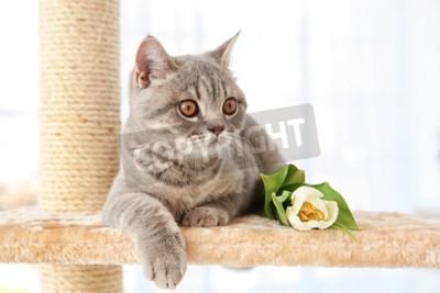 Carta da parati Gatto sveglio che si trova sul affilatoio di artiglio con il tulipano nella stanza leggera