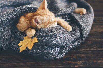 Carta da parati Gigner gattino che dorme