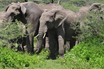 Carta da parati Giovane elefante africano in mandria