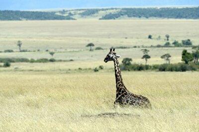 Carta da parati Giraffa nella savana