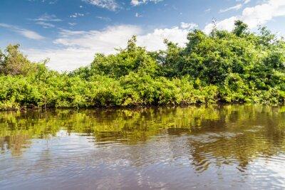 Carta da parati Gli alberi che costeggiano yacuma in Bolivia