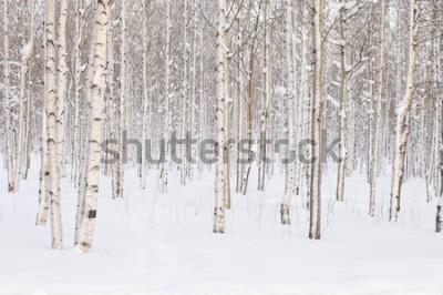 Carta da parati Gli alberi nel parco o il bosco in inverno nevicano