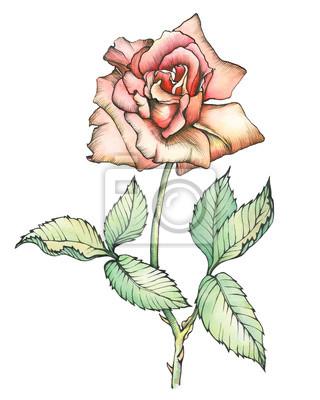 Grafico Fiore Rosa Ramo Primo Piano Di Rosa Con Foglie