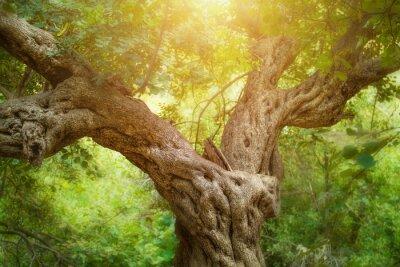 Carta da parati Grande albero nella foresta