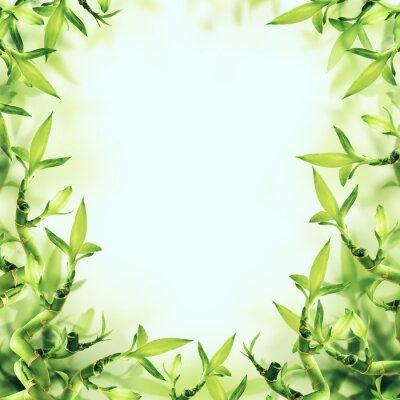 Carta da parati Green Bamboo Background. Spa e sano