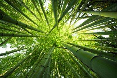 Carta da parati Green bamboo nature backgrounds