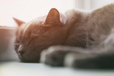 Carta da parati grigio gatto addormentato sulla finestra, annata tonica