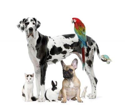 Gruppo Di Animali Domestici Cane Gatto Uccello Rettile Carta