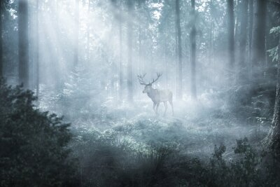 Carta da parati Hirsch im nebeligen Wald