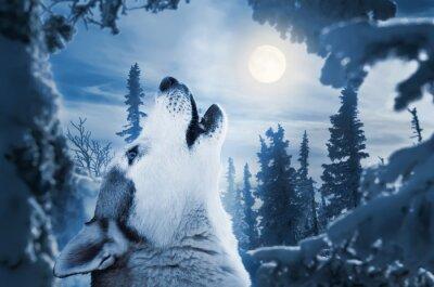 Carta da parati howling to the moon