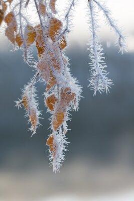 Carta da parati Il gelo ha coperto i rami degli alberi