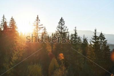 Carta da parati Il paesaggio autunnale di montagna con foresta colorata. Scena drammatica di mattina, foglie di autunno rosse e gialle. Posizione luogo Carpazi, Ucraina, Europa.