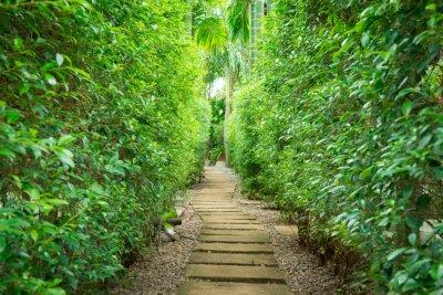 Carta da parati Il percorso in giardino