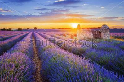 Carta da parati Il sole tramonta su una bella lavanda viola depositata a Valensole. Provenza, Francia