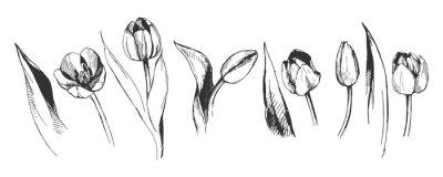 Carta da parati illustrazione del fiore decorativo del grafico del fiore del tulipano