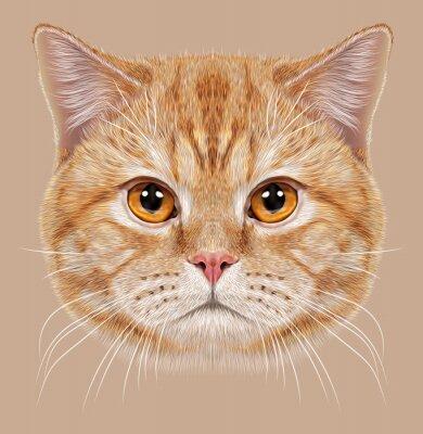 Carta da parati Illustrazione del ritratto British Cat capelli corti. Carino arancione Gatto domestico con gli occhi di rame.