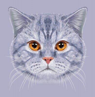 Carta da parati Illustrazione del ritratto British Cat capelli corti. Carino grigio tabby Gatto domestico con gli occhi arancioni.