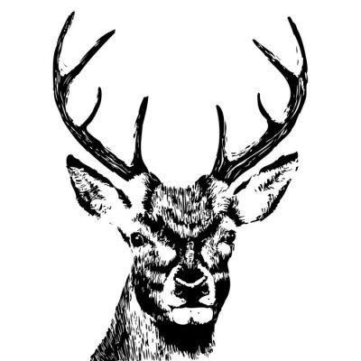 Carta da parati illustrazione di una testa di cervo, grunge, silhouette isolato su bianco