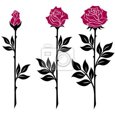 27eca9a48c Carta da parati illustrazione vettoriale, elemento di decorazione, in bianco  e nero rami rosa