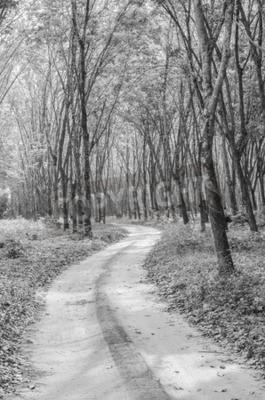 Carta da parati In bianco e nero della via della foresta