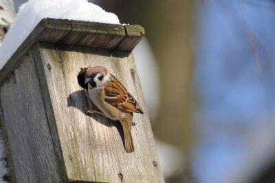 Carta da parati In inverno finitura mattugia indaga possibili FACI nido