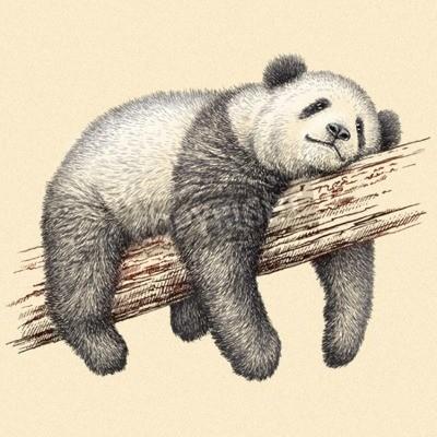 Carta da parati incidere isolato orso panda illustrazione schizzo. arte lineari