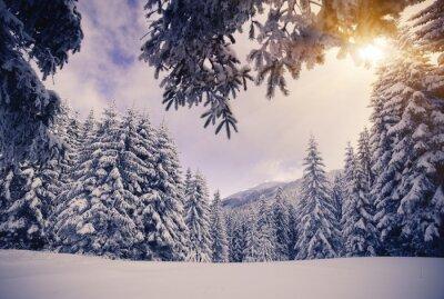 Carta da parati inverno