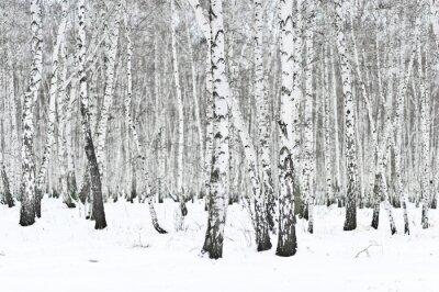 Carta da parati inverno foresta