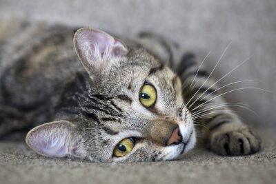 Carta da parati kedi