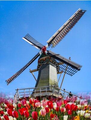 Carta da parati Keukenhof - Olanda