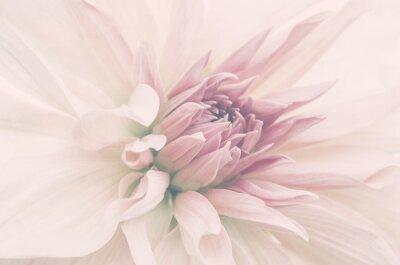 Carta da parati Kwiat ze ślubnego bukietu, delikatne płatki, ujęcie macro.