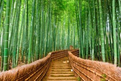 Carta da parati Kyoto, Giappone Bamboo Forest