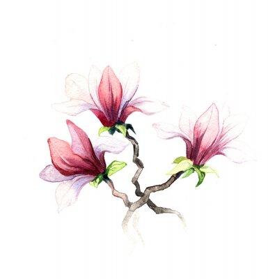 Carta da parati l'acquerello fiori di magnolia isolato su sfondo bianco