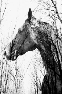 Carta da parati La foresta all'interno del cavallo ina arte, multiexposition