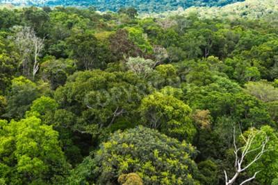 Carta da parati La foresta amazzonica in Brasile