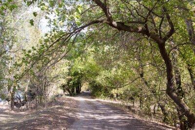Carta da parati La strada nel bosco