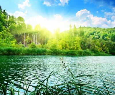 Carta da parati lago nel profondo delle foreste
