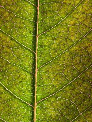 Carta da parati leaf macro sfondo